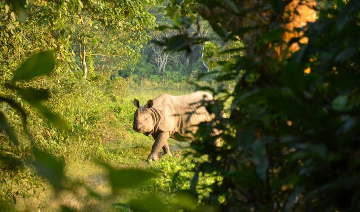 one-horn-rhino-at-chitwan